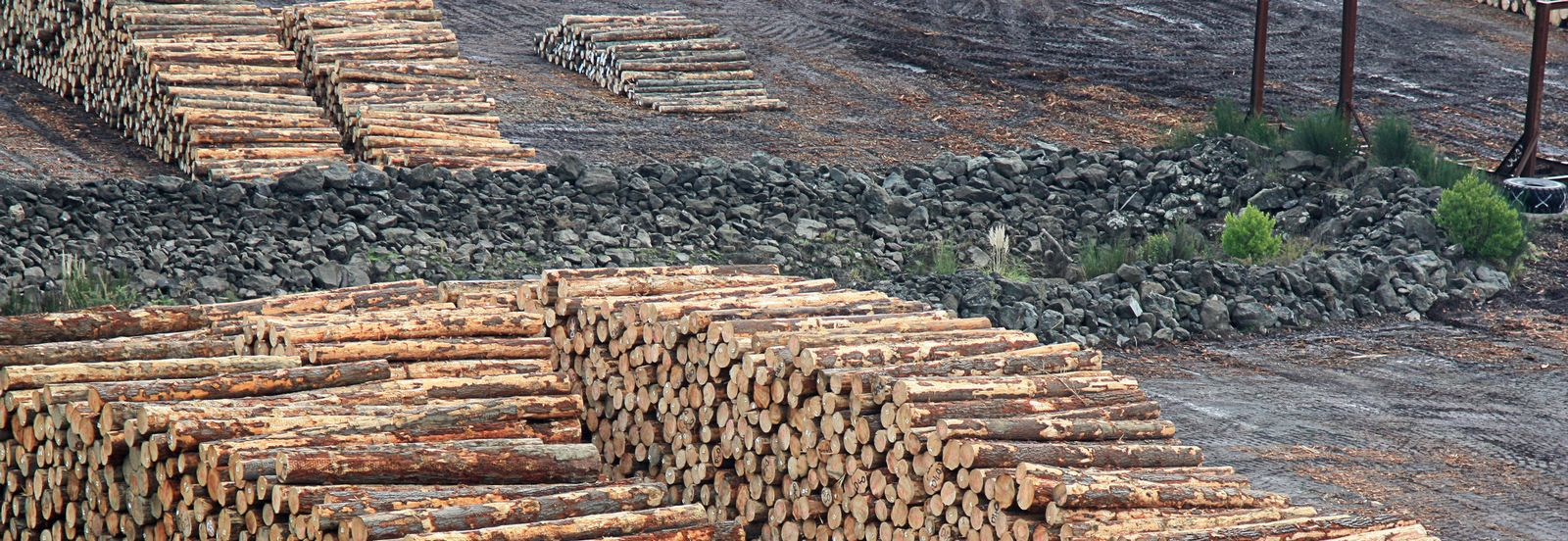 COMMERCIAL FIREWOOD